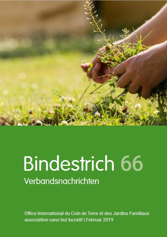 Office International - Bindestrich 66