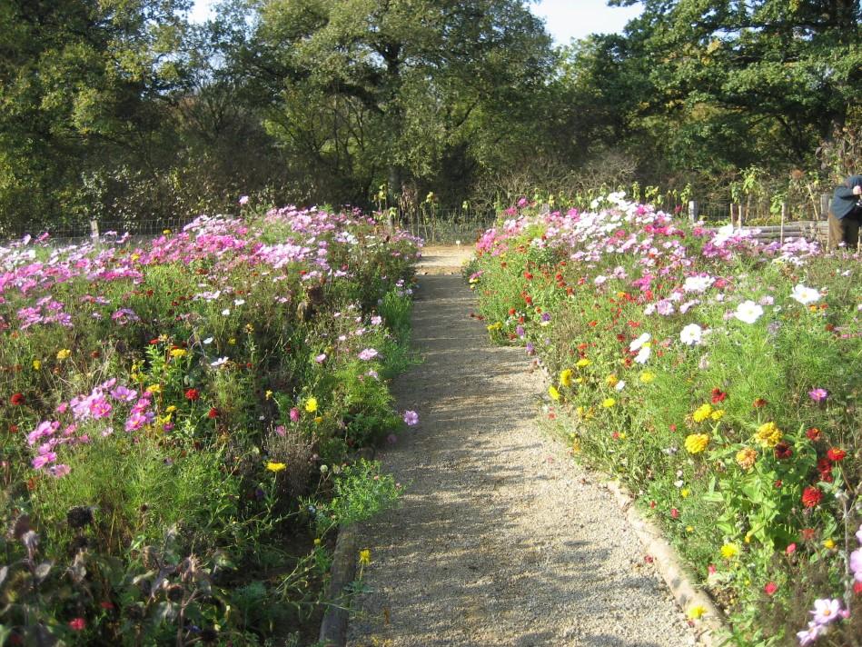 Gartenarbeiten im September