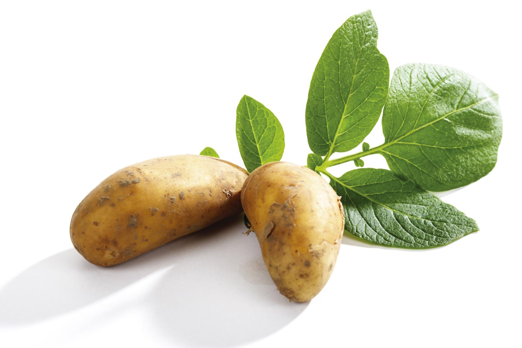 Steckbrief Kartoffel