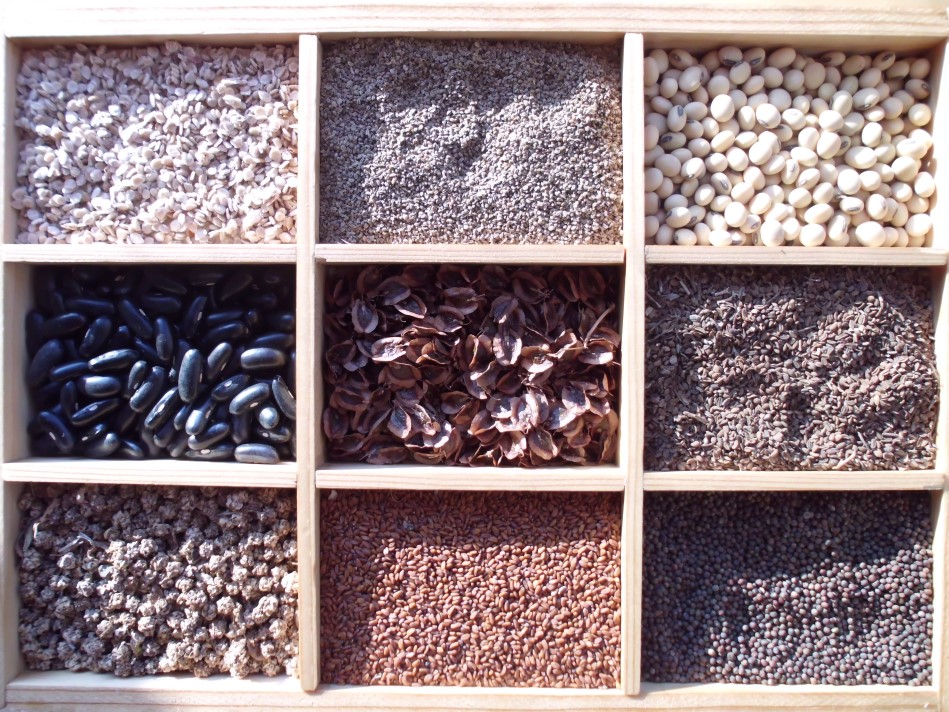 Gründe und Ziele des traditionellen Samenbaus I
