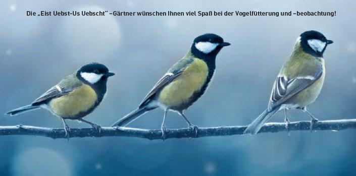 Winterbesuch im Garten: Tipps von Ihrem Eist Uebst-Gärtner
