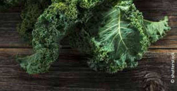 Tipps von Ihrem Eist Uebst-Gärtner: Grünkohl gesundes Wintergemüse
